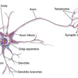 動物の組織-神経組織-