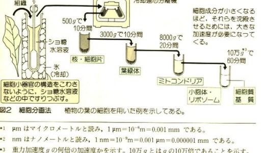 細胞内構造の研究方法