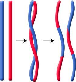不完全連鎖-乗り換えと組み換えの違い-