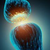 神経伝達物質の種類