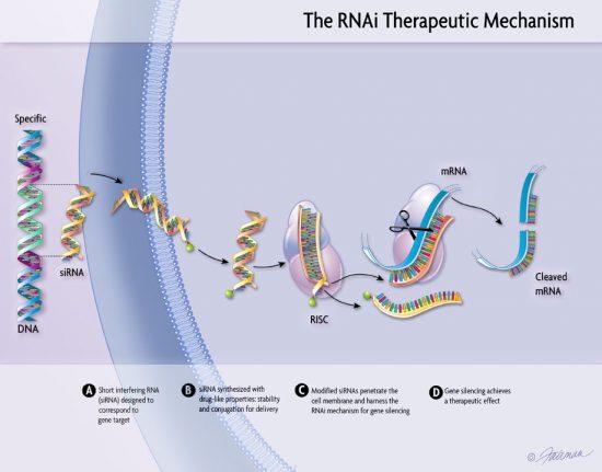 RNA干渉