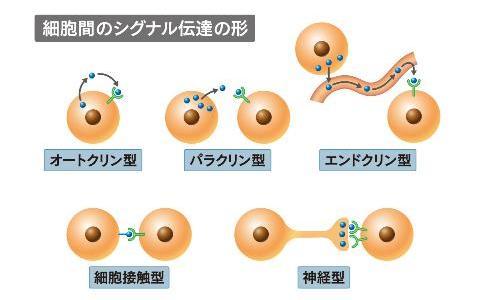 細胞外でのシグナル伝達