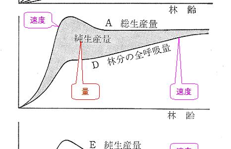 森林の物質生産のグラフ