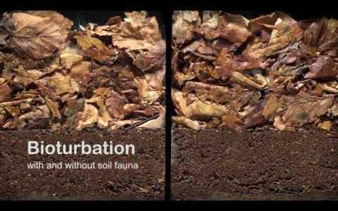 土壌生物あるなしで枯葉の分解速度がどれくらい違うのかを比較実験してみた