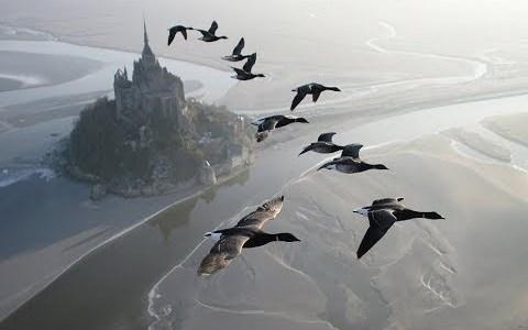渡り鳥と一緒に飛ぶ!誰もが一度は夢見たことあるシーンが実現する!