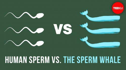ミクロの世界での運動はマクロの世界のそれとは異なる!?精子(sperm)とマッコウクジラ(sperm whale)の違い