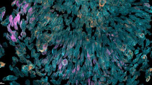 3D顕微鏡の技術がすごい!!生きた組織を三次元でみることができる新技術
