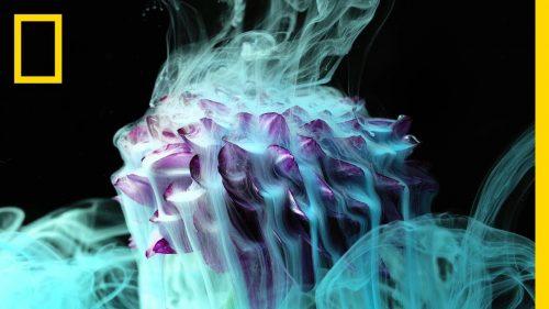 花を燃やしたり凍らせたり水に入れてインクをぶっかたりとやりたい放題なNational Geographicのおしゃれ映像