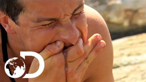 【閲覧注意】元軍人サバイバル家のベア・グリルスの最も際どい映像ベスト3