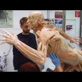 死体を樹脂でコーティングするプラスティネーションはどのような技術なのか?