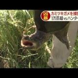 【NEWS】千葉県で大繁殖したカミツキガメ1万匹を駆除する作戦が実施されるも1匹捕獲できたのみ