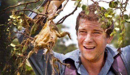 【サバイバル】アフリカでウシガエルを食べる方法を伝授してみた