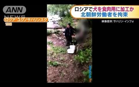 【NEWS】ロシアで犬を解体していた北朝鮮国籍の男性が捕まる事件が発生