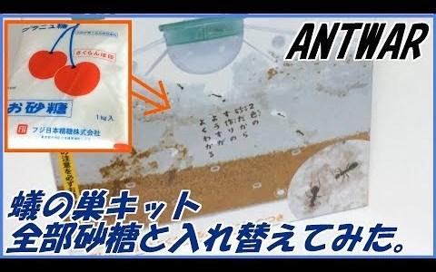 蟻の巣観察キットの砂を全部砂糖に入れ替えたらどうなるか検証してみた