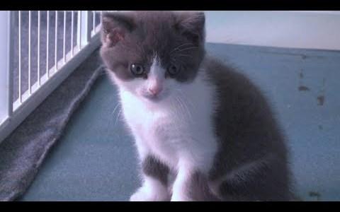 愛ネコを失った中国人ビジネスマンがクローンネコを作成する