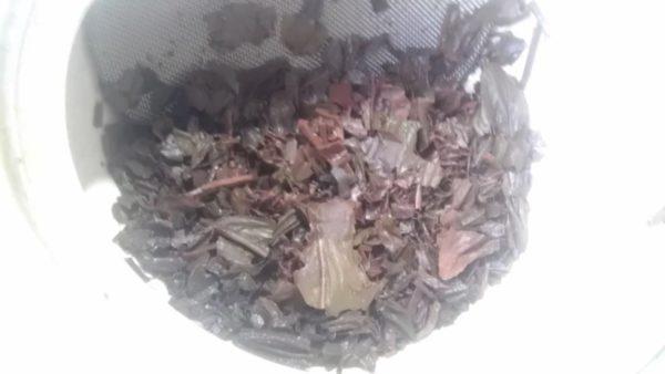 矢部屋 許斐本家 このみ園20130910 八女紅茶2013 -茶殻
