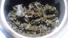国産紅茶20131023山片茶園在来春3