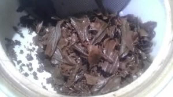 国産紅茶20131108永谷農園永谷の手作り 宇治の紅茶2013 -3