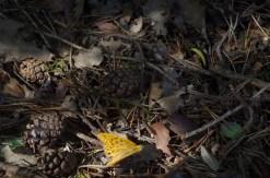 IMGP9339 Papillon sur branchages.JPG