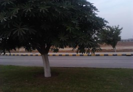 Gulberg-Residencia-Islamabad-Pictures-99
