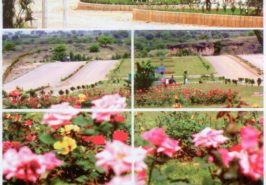 CBR Town Phase 2 Islamabad Pictures 8