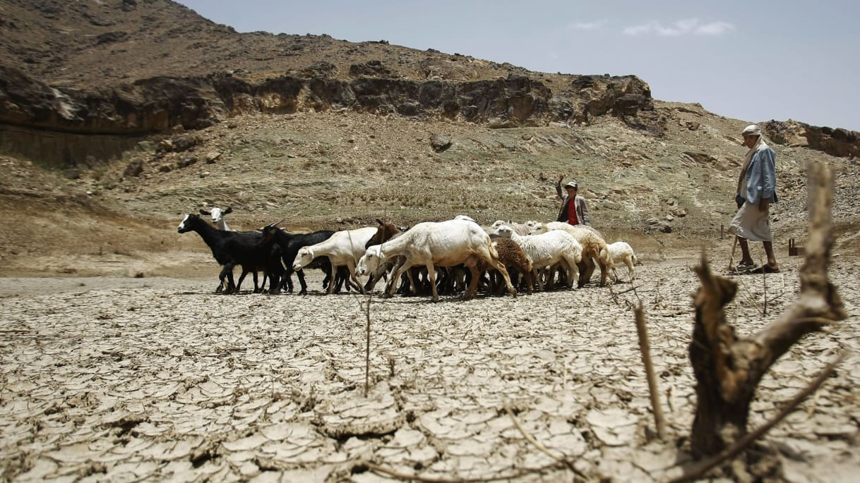 A shepherd with his goat herd in drought-stricken Yemen.