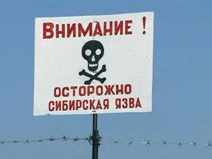 В Нарынской области у двух человек обнаружена сибирская язва