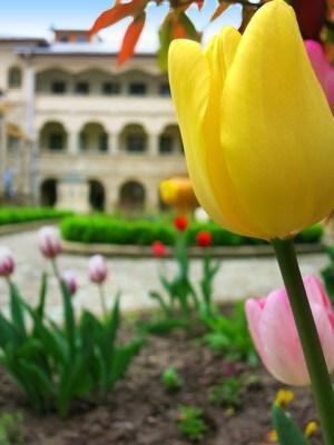Flori in curtea manastirii