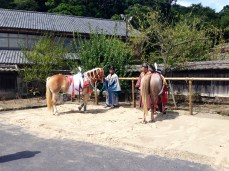 The horses, being groomed for the main event