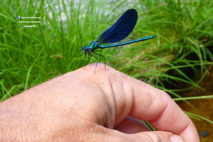 mancha snowmancha libelinha dragonfly serra da estrela portugal visitserradaestrela