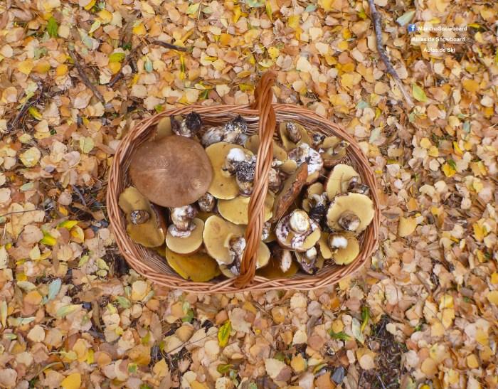 cogumelo mushroom serra estrela mancha instrutor