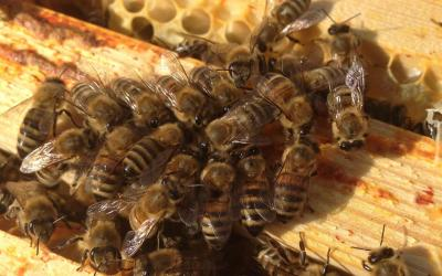 City Centre Beehives – Manchester Museum