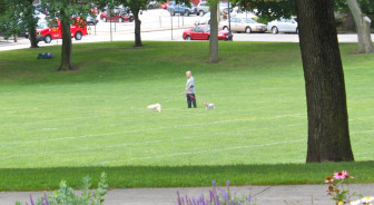A man walks his dogs at Bronstein Park on Friday.
