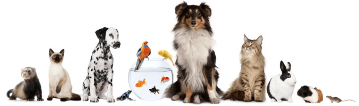 Wanted by FMAS: Animal adoption counselor.