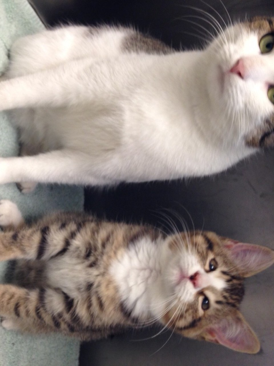 ADOPTED: Phil with his feline bestie, Vixen, pals since they were rescued from the streets (credit MSPCA-Angell)