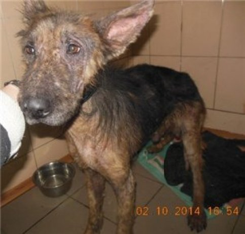 One of thousands of dogs abandoned or left behind in war-torn Ukraine.