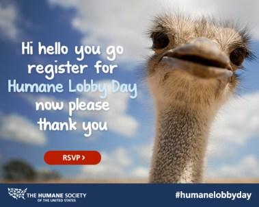postcard-hld2015-register-ostrich