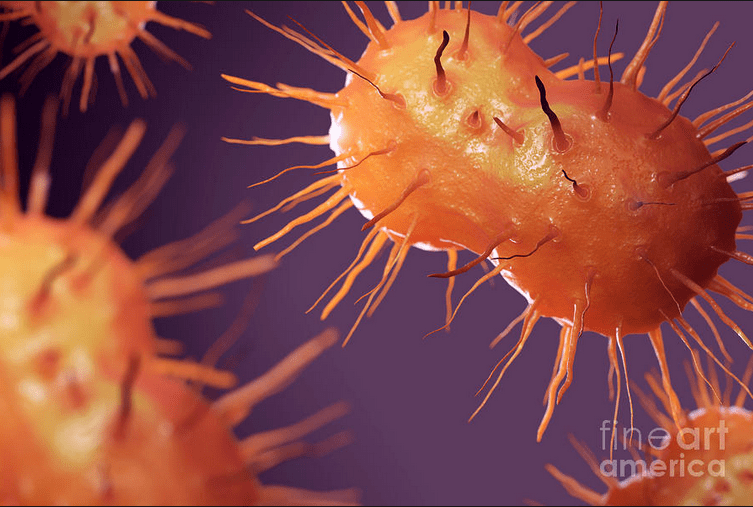 STD Outbreak: Reported cases of gonorrhea up 250% in NH