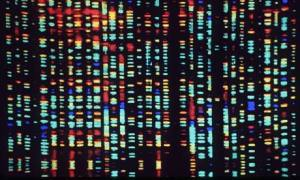 Il genoma umano