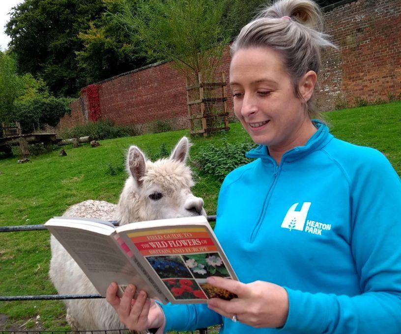 Reading to a Llama at Heaton park