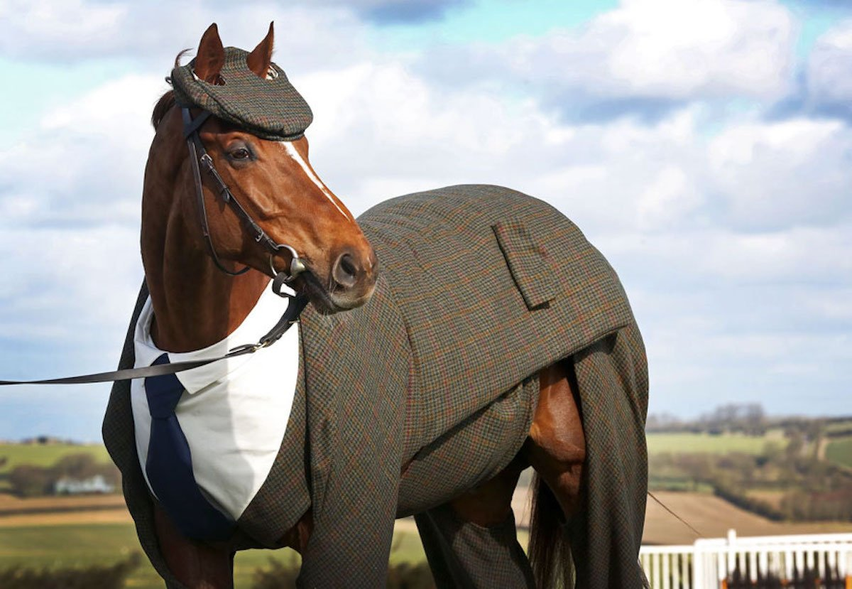 Anzug Pferd Rennpferd Alexander McQueen William Hill Cheltenham Festival 2016 Emma Sandham-King