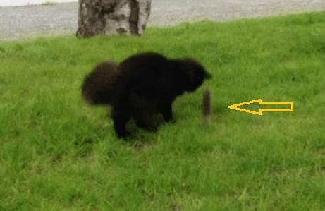 ninja-mus_angrep_katt