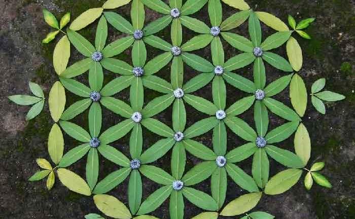 Ana Castilho mandala-di-foglie-geometrico--mandala-da-colorare