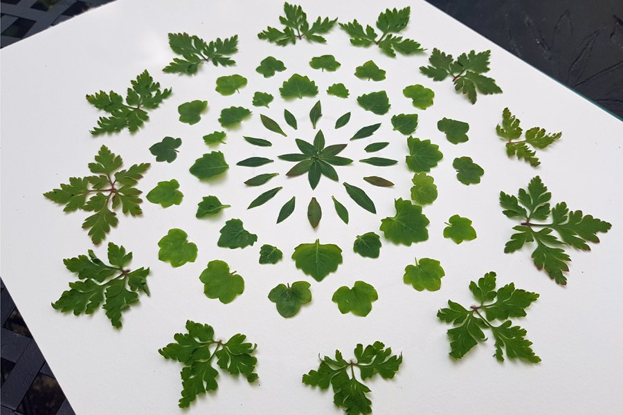 Nature mandala made from circular, symmetircal patterns made with leaves