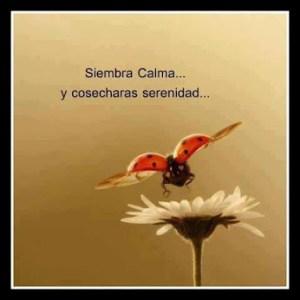 CALMA Y SERENIDAD
