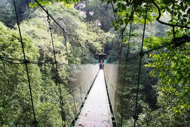 canopy trail ciwalen cibodas gede pangrango cianjur