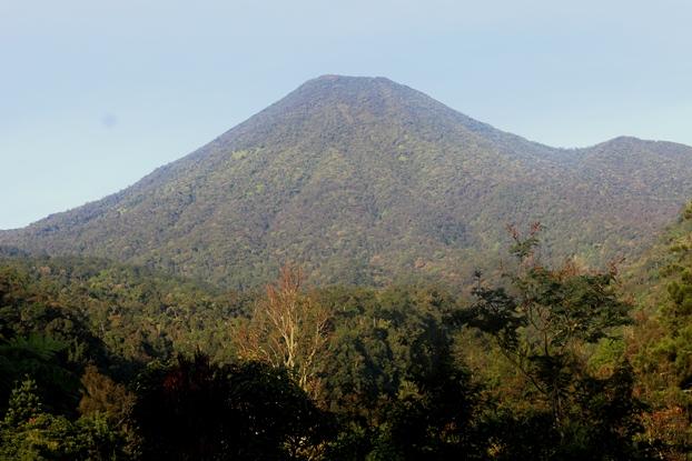hutan menuju curug cibeureum gede pangrango