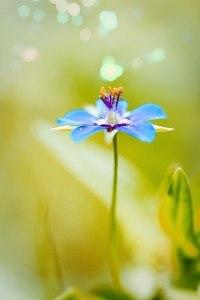 цветок души