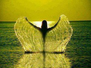 крылья вода