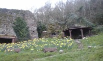 The castle and LOTS of daffodils !